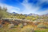 14340 Desert Tortoise Trail - Photo 14