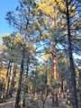 2941 Antelope Trail - Photo 4