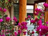 14129 Monterra Way - Photo 54