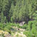 1023 Stone Hollow Loop - Photo 7