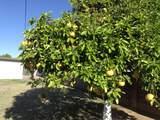 4815 La Rosa Drive - Photo 11