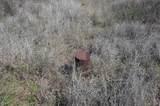 4035 Yucca Lane - Photo 3