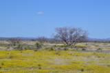Tbd 318 Ac Highway 191 - Photo 16