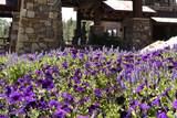 1442 Castle Hills Drive - Photo 69