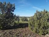 5 Acres Tbd Roadrunner Road - Photo 13