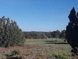 5 Acres Tbd Roadrunner Road - Photo 16