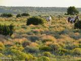 TBD 35.90 Acres Sanders - Photo 27