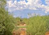 4220 Desert Forest Trail - Photo 49