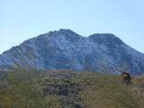 14247 Lone Wolf Trail - Photo 6
