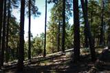 1500 Forest Service 12.488 Road - Photo 28