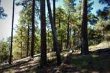 1500 Forest Service 12.488 Road - Photo 29