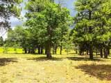 911 Torrey Pines Drive - Photo 10