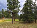 911 Torrey Pines Drive - Photo 5