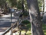29 Ramsey Canyon Road - Photo 46