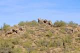 11132 Harris Hawk Trail - Photo 19