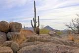 11132 Harris Hawk Trail - Photo 21