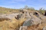 11132 Harris Hawk Trail - Photo 5