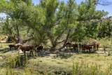 4150 Iron Horse Road - Photo 52