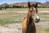 4150 Iron Horse Road - Photo 58