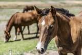 4150 Iron Horse Road - Photo 59