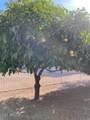 16512 Desert Wren Court - Photo 63
