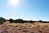 181 River Springs Ranch - Photo 28