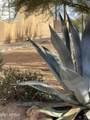 14335 Desert Vista Trail - Photo 27