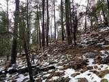 1262 Christopher Creek Loop - Photo 6
