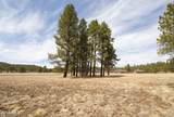 4565 Brackin Ranch Road - Photo 8