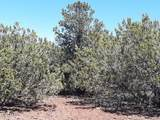 174 Co Rd  3187 9 Acres Lot C - Photo 11