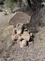 26640 Tarantula Trail - Photo 41