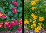12926 Chapala Drive - Photo 52