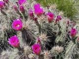 13627 Rancho Laredo Drive - Photo 104
