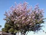 4815 Cochise Drive - Photo 6