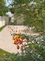 9711 Wrangler Drive - Photo 49