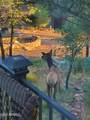 4658 Canyon Vista - Photo 38