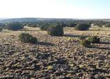 1003 Snake Ranch Road - Photo 6