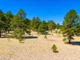 970 Appaloosa Trail - Photo 3
