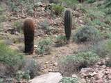 14620 Deer Trail Court - Photo 10