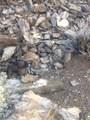 000 Trilby Mine - Photo 8