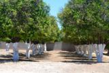 2061 Orchard - Photo 3