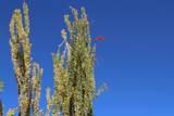 11263 Ajave Drive - Photo 82