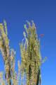 11263 Ajave Drive - Photo 83
