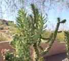 11263 Ajave Drive - Photo 92