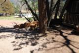 6416 Pine Cone Trail - Photo 38