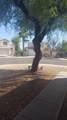 13549 Desert Flower Drive - Photo 17