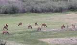 64 Apache County Rd 1323 - Photo 39