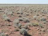TBD Holbrook 38.94 Acres - Photo 1