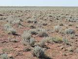 TBD Holbrook 38.75 Acres - Photo 3