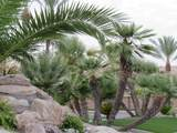 7710 Gainey Ranch Road - Photo 30